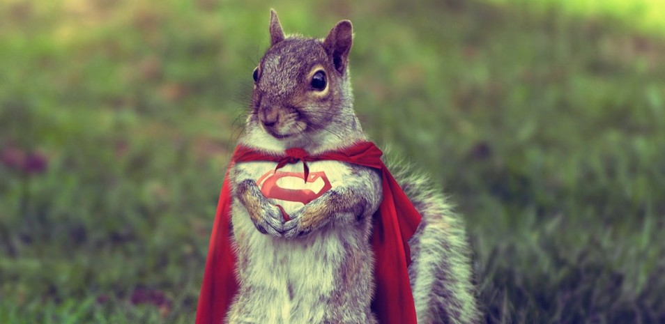 Squirrel Superman